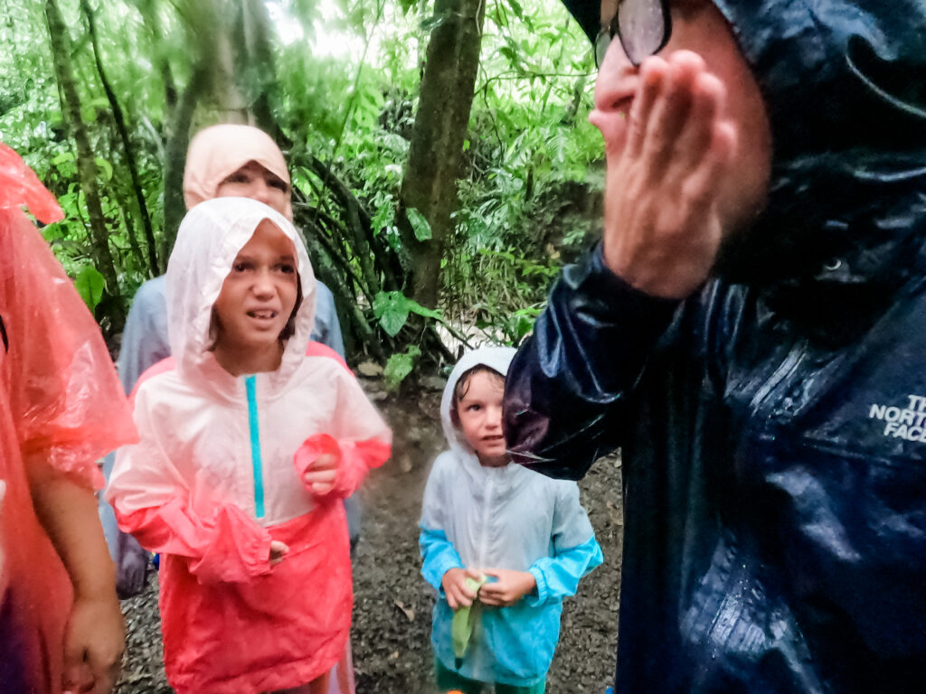 rainforest with kids